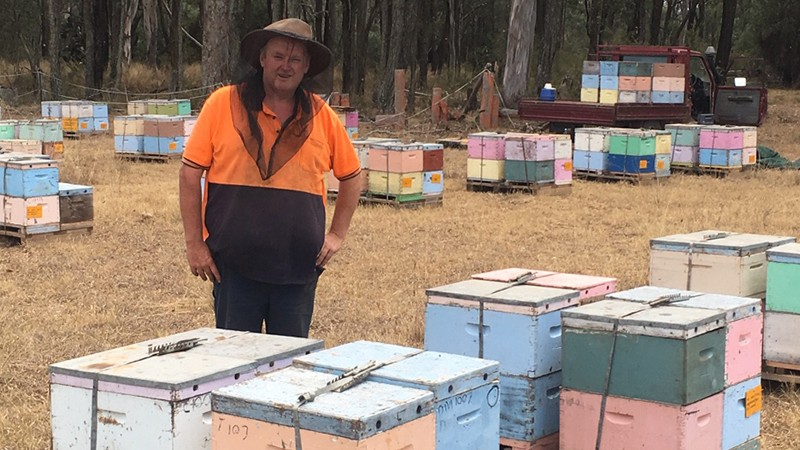 Beekeepers stung by drought and bushfires
